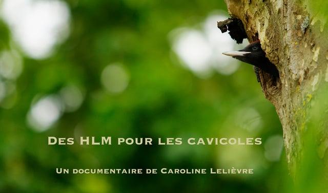 Affiche HLM cavicoles