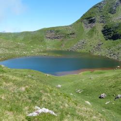 Etude des populations d'Amphibiens du Lac d'Arlet