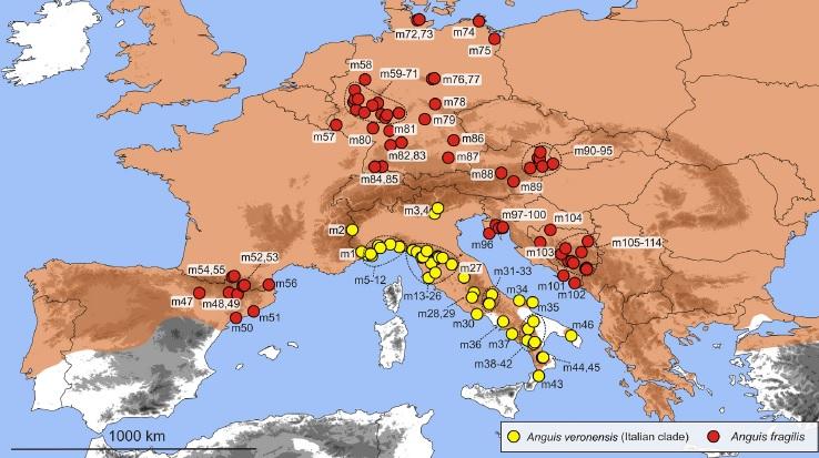 Carte des Orvets (Gvozdik et al., 2013)