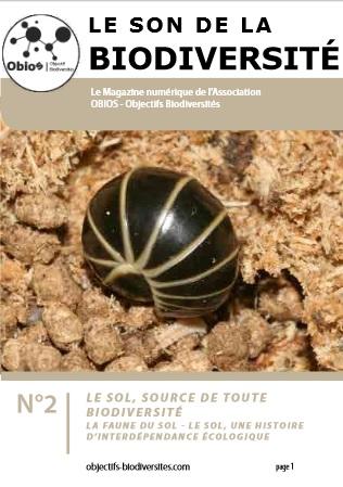 Le Son de la Biodiversité n°2 : Le Sol
