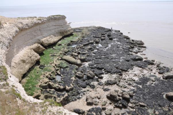 Estran rocheux de l'estuaire de la Gironde