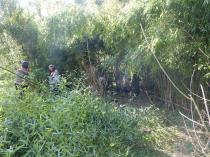 Limitation de la bambouseraie