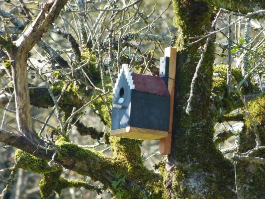 Un nichoir pour le printemps (c) OBIOS.